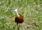 Among wildflowers