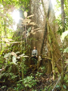 Jungle cathedral