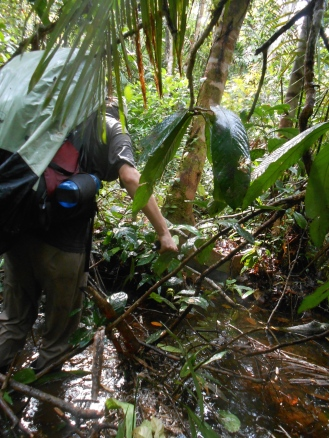 Jungle trial