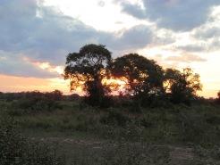 Pantanal sunrise